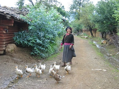 woman geese small